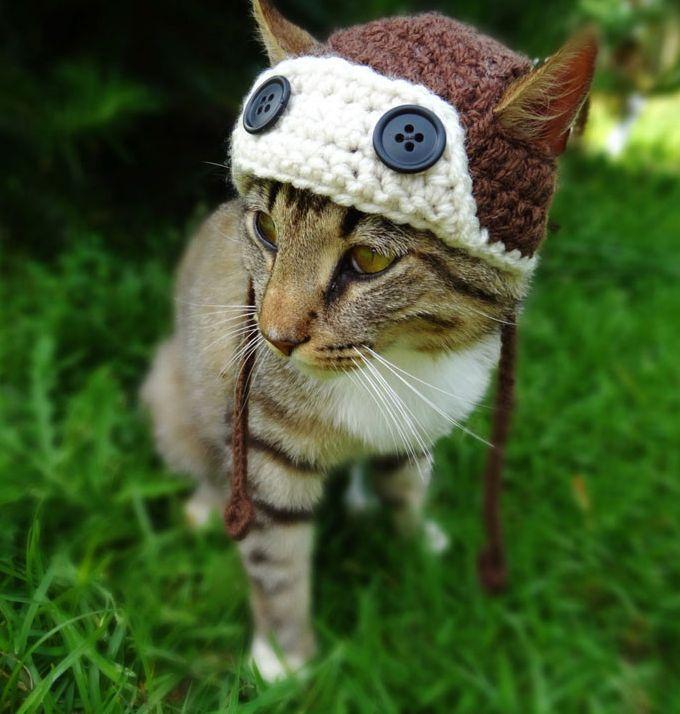 Şapkalı Kediler ve Köpek