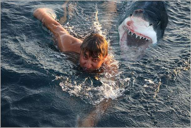 Great White Shark Attacks On Humans | sharks eating people ...