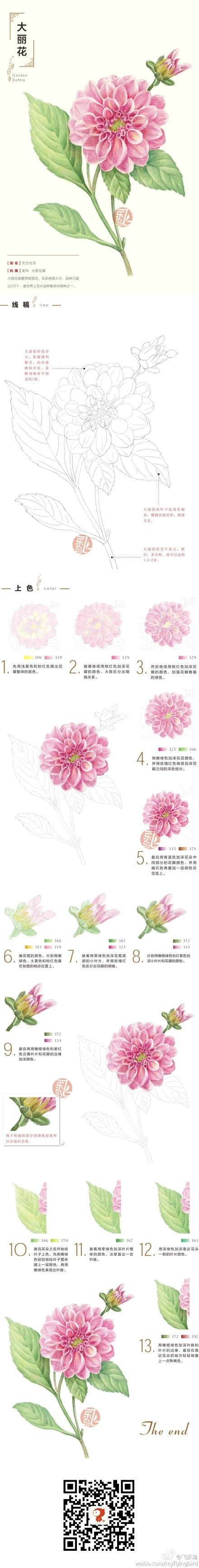 How to draw and paint a Dahlia