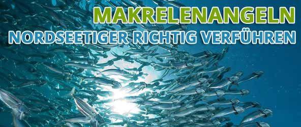 Makrelenangeln – Nordseetiger richtig verführen | Angelplatz.de News – Nachrichten zum Thema Angelsport