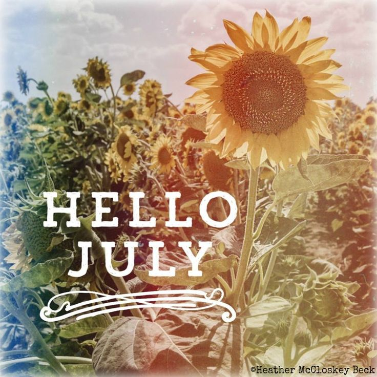 Hello July #july Hello July Sunflowers