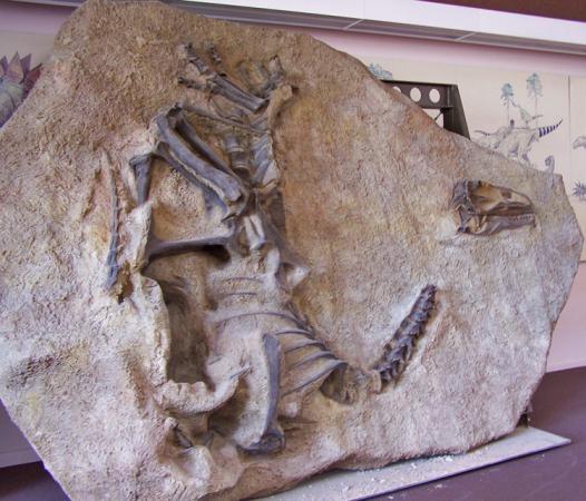 Dinosaur fossils at the Dinosaur National Monument visitor center