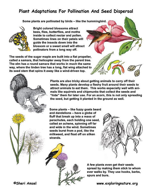 animal pollinators | Pollination and Seed Dispersal Adaptations -- Exploring Nature ...