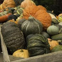 How to Freeze Pumpkin and Winter Squash