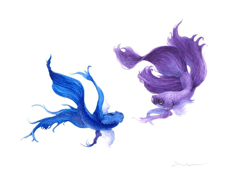A personal favorite from my Etsy shop https://www.etsy.com/listing/238256785/betta-fish-watercolor-painting-print-85
