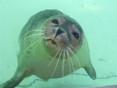 Ecomare (marine museum) Texel, NL. Open daily 9.00-17.00, (rescued) seals fed 11.00, 15.00