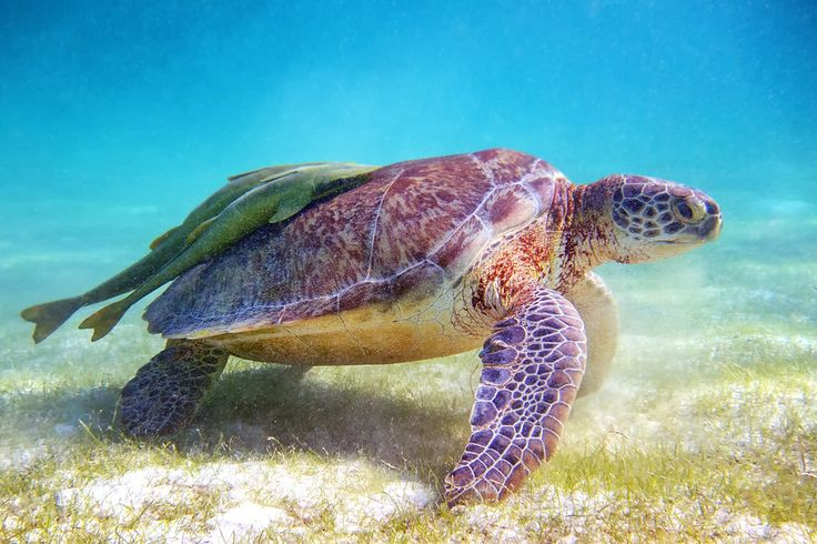 7 Adventures You Should Experience In Playa Del Carmen • Expert Vagabond