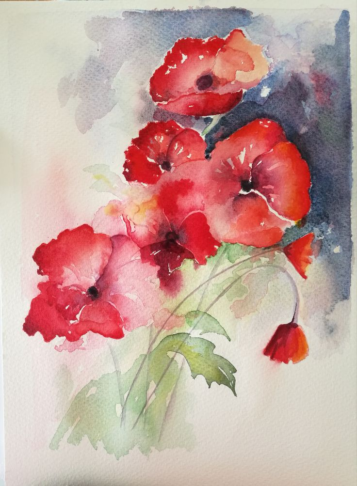 Poppies - watercolours
