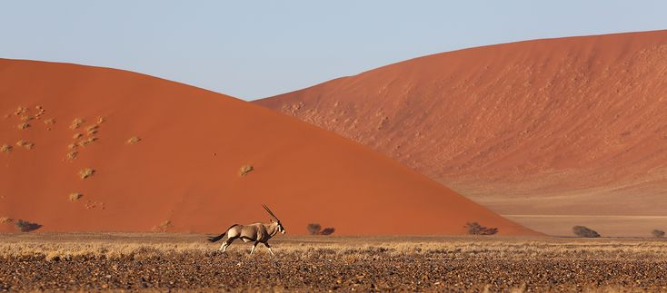 Namibia Safari Tours - Expedition Adventure of a Lifetime Apex Expeditions
