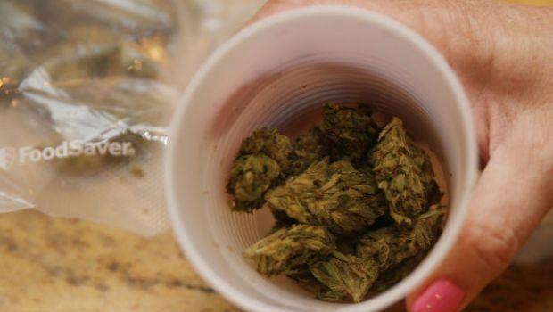 Legalizzazione della cannabis in Italia, via all'intergruppo