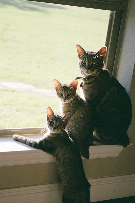 One Two THREE ... cute funny cats