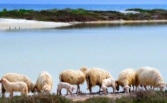 Sardegna natura..ovunque!!