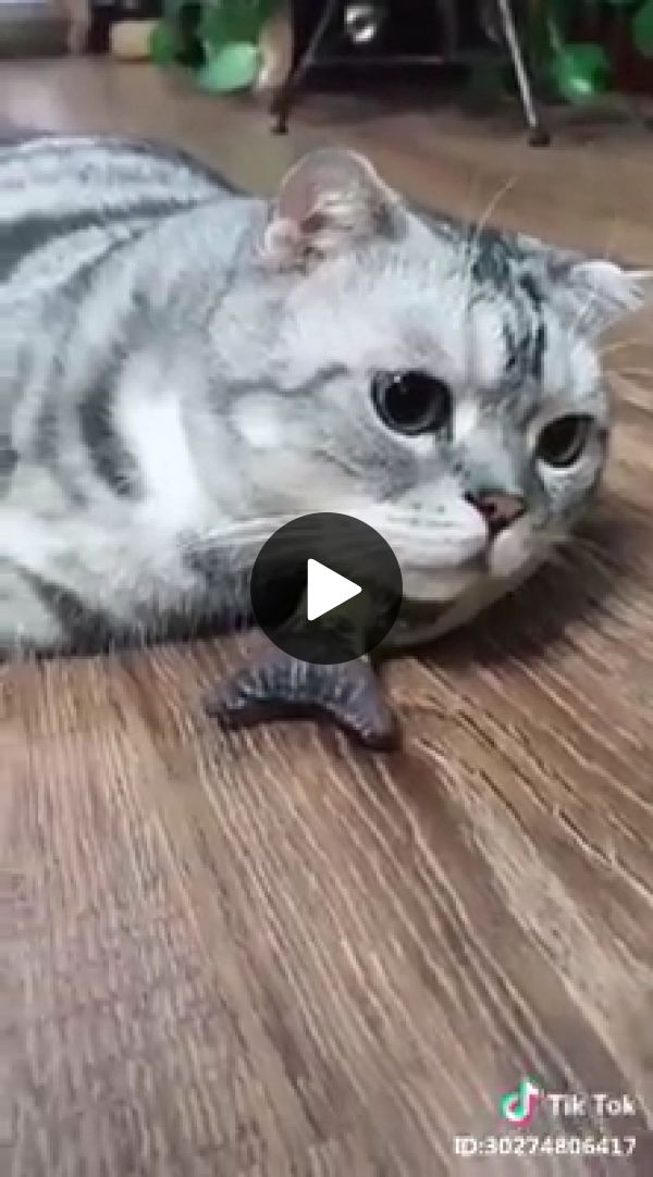 Hey Little Mouse Thank You Funny Cat Faces Cats Cute Cats