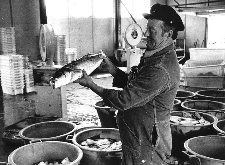 ouderwetse viswinkel - Google zoeken