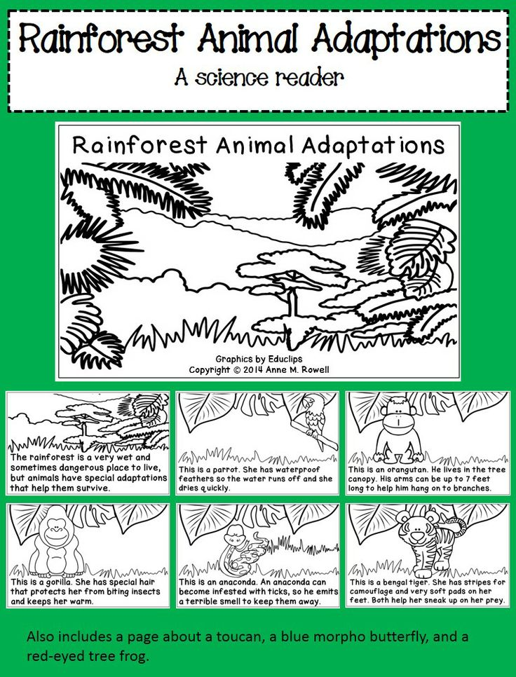Best 281 Rainforest Lesson Plans images on Pinterest | Education