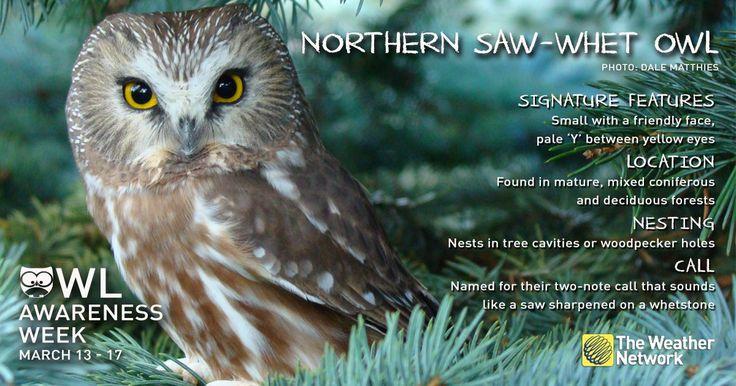 #owlawarenessweek - Twitter Search