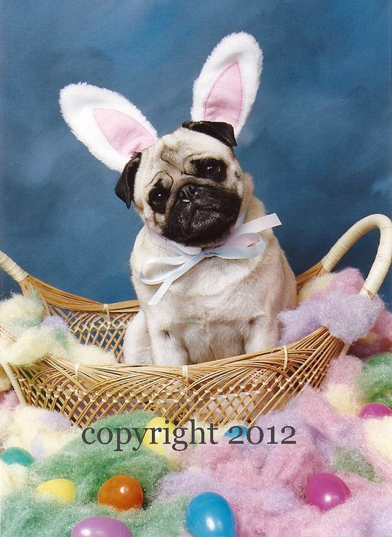 Pug Dog Easter Bunny 5x7 Photo Note Card by Shutterpug on Etsy, $2.25