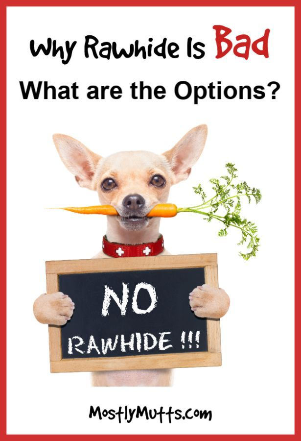 Are Rawhide Bones Bad For Dogs Rawhide Bones Big Dog Little