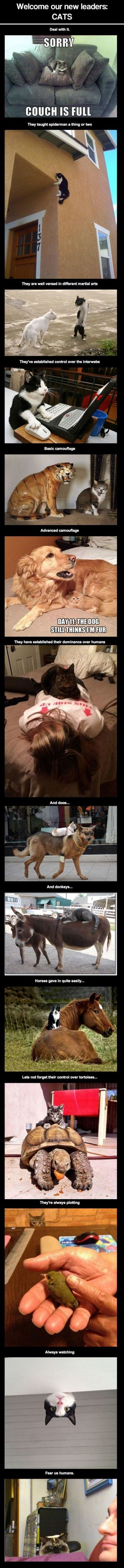top 50 #funny #humor Animals, Quotes and picture