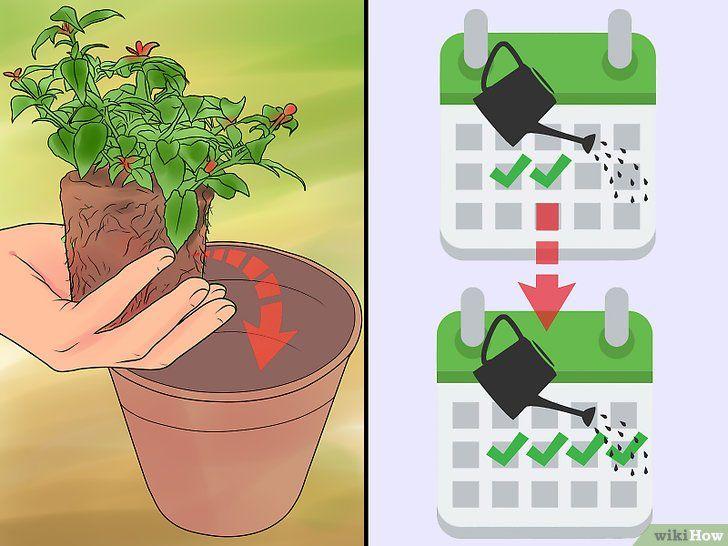 21+ Cuando regar las plantas de exterior ideas