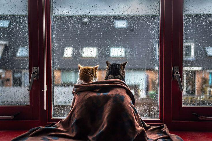 Fotógrafa faz série fofa de seus gatos na janela em dia de chuva