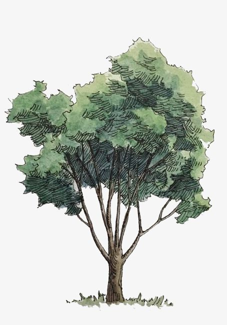 22+ Tree Cut Out Png