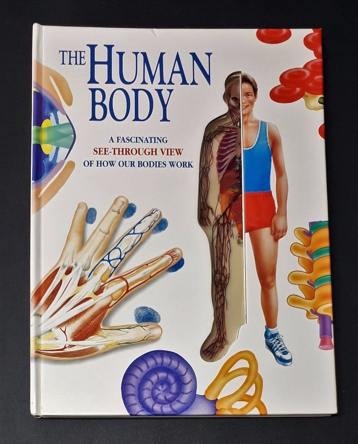 The Human Body Fascinating See Through View of How Our Bodies Work 1993 | eBay