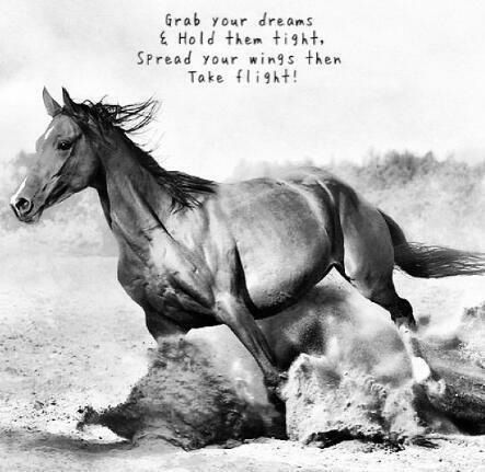 Grab your dreams and hold them tight, spread your wings then take flight! #HorseQuote