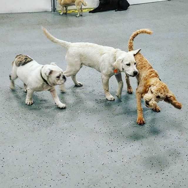 Small Dog Boarding Salt Lake City In 2020 Dog Boarding Dog Boarding Facility Dog Boarding Kennels