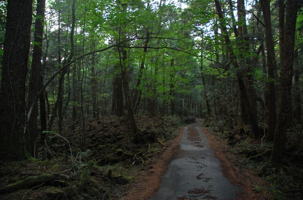 Suicide Forest, Aokigahara, Japan | 10 Ghost Stories That Are Totally Freaking Real