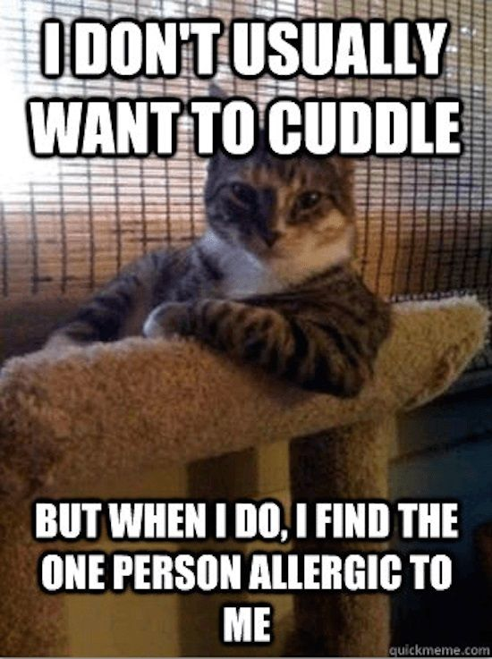 I Don't Usually Want To Cuddle... #catoftheday