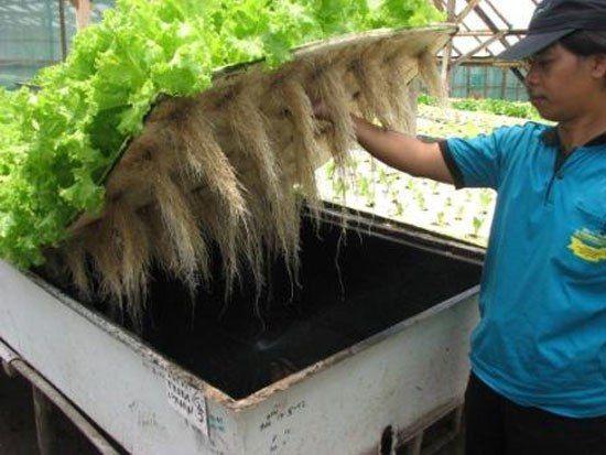Salah satu cara untuk mendapatkan sayuran segar tanpa pestisida adalah dengan menanam sendiri sayuran. Yang jadi masalah adalah tidak semua orang mempunyai lahan untuk menanam sayuran. Oleh karena …