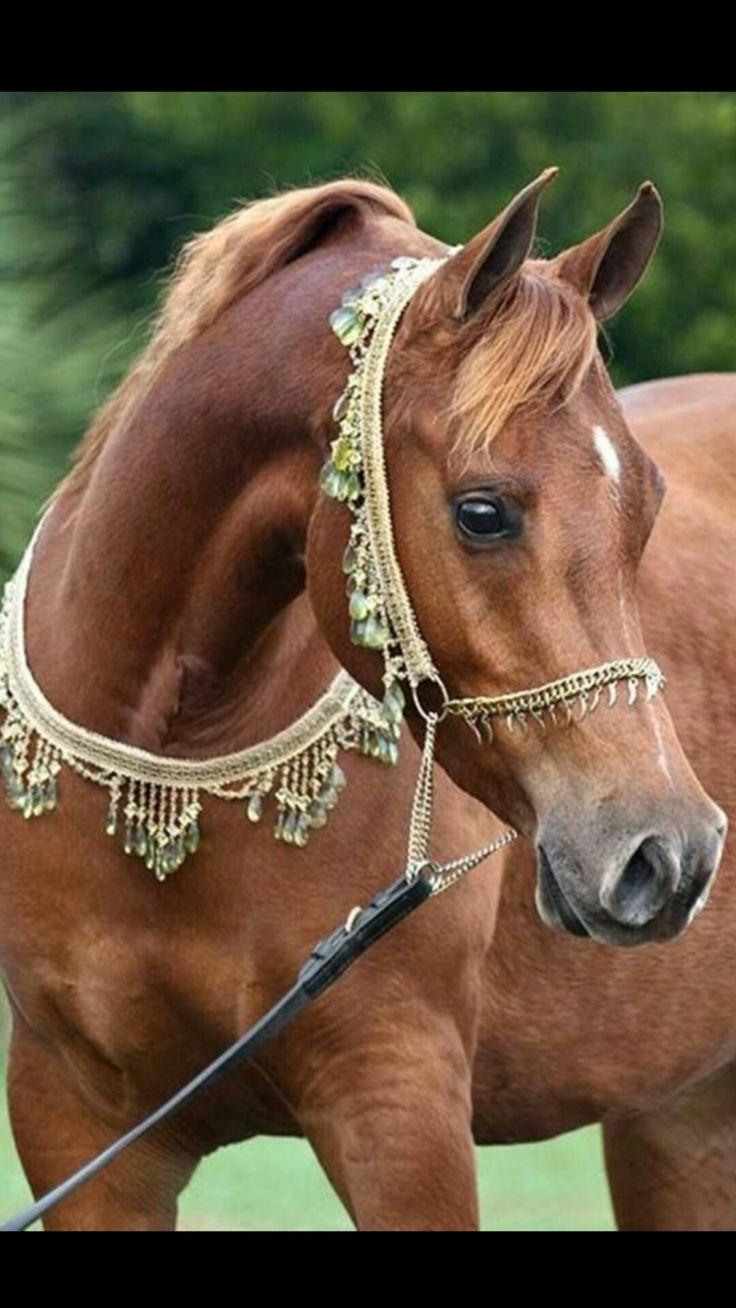 картинки нарядные лошади ним лисицын регулярно