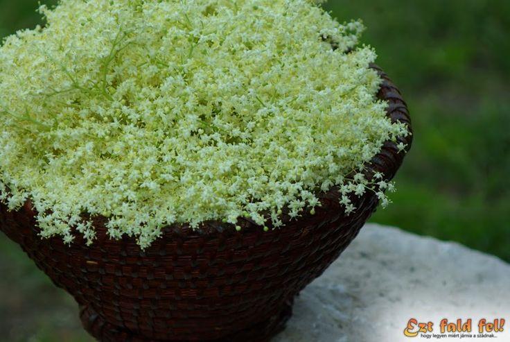 Ezt fald fel!: Bodzaszörp bodzavirágból – az isteni házi bodzavirágszörp