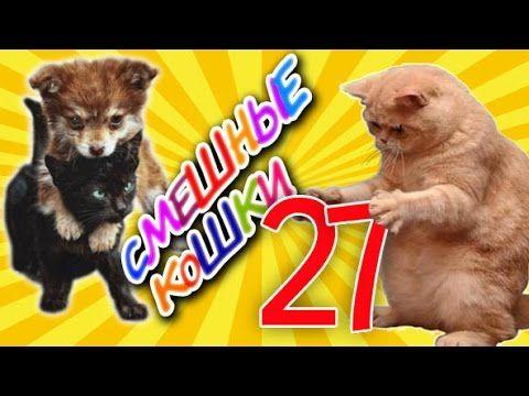 Смешные кошки 27 ● Приколы с животными 2015 ●   Funny cats vine compilation - Part 27  Замечательный ролик с кошками, собачками и попугаями! ))))