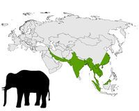 Rango del elefante asiático Imágenes de archivo libres de regalías