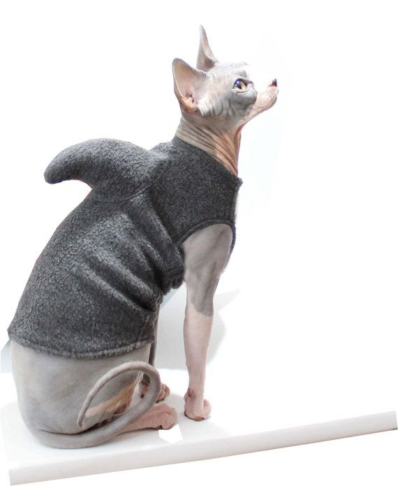 Pet Shark Sweater Cat Shark Costume Sphynx Cat by SimplySphynx