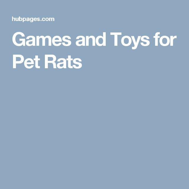 Games and Toys for Pet Rats