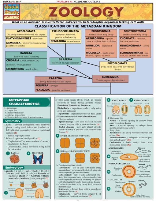 Zoology Download this review guide and improve your grades