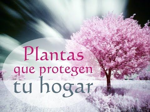 Plantas que protegen tu hogar - YouTube