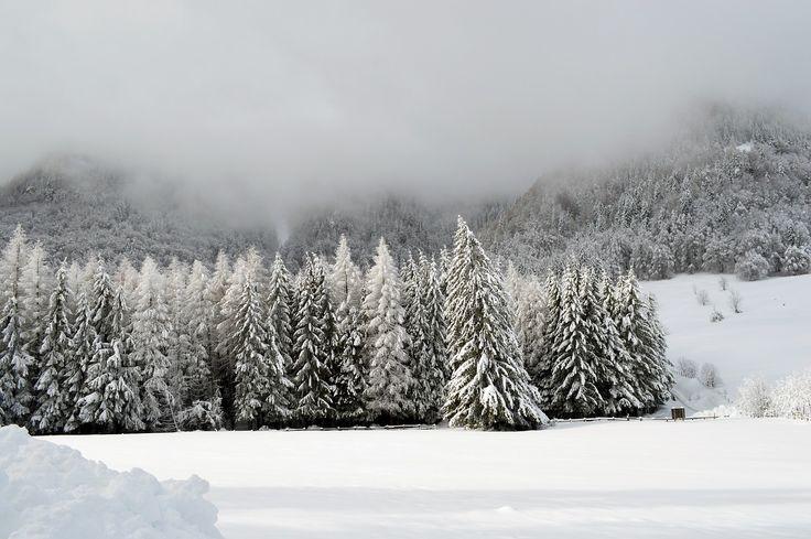 Winter, Scene, Mountain, Wonderland, Forest, Cold