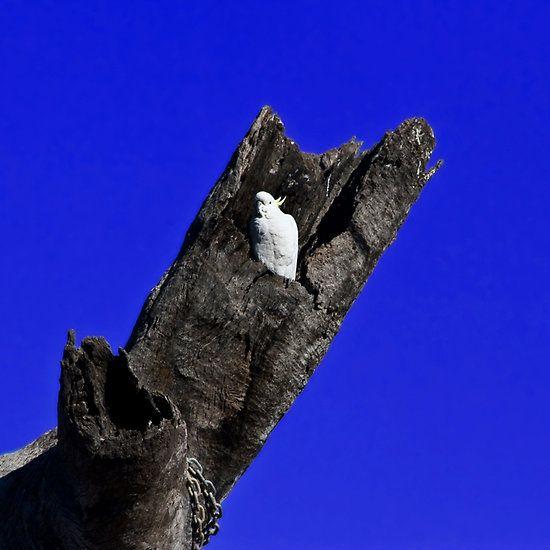 White Cockatoo Nesting Above Elephants