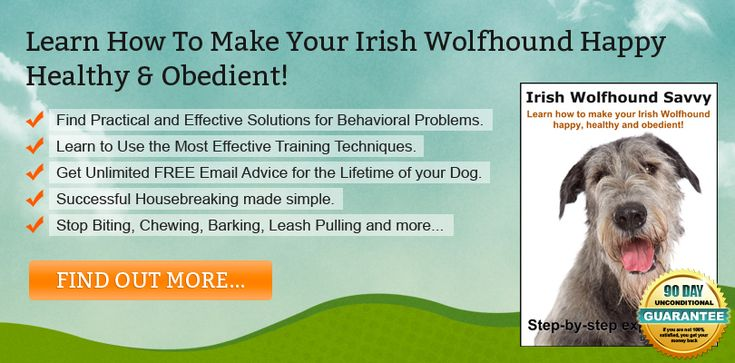 Irish Wolfhound Training Information For Dog Owners