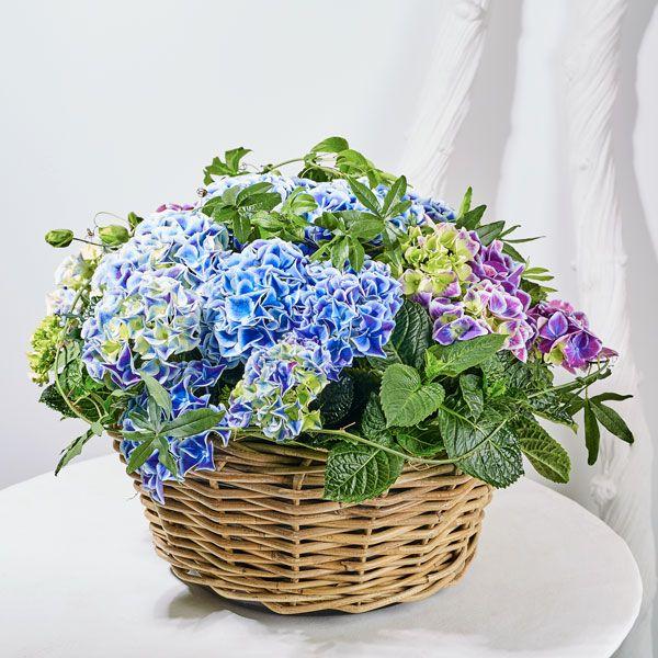 Mand Hortensia.  Velen van u bezoeken met regelmaat een graf of een herdenkingsplaats van uw overleden dierbaren. Het is dan niet ongebruikelijk om bloemen of planten te plaatsen. Gemaakt door Afscheid met Bloemen.