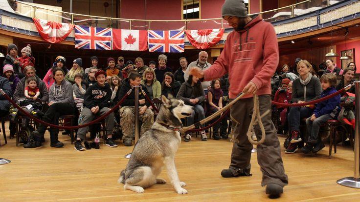 The Best Dog Show! #DawsonCity #Thaw2016 #VisitDawson #ExploreYukon #Husky #Famous #Tricks #EveryonesAWinner #DogLove #ComeToMyYukon