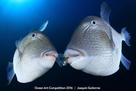 Лучшие подводные фотографии 2016 года