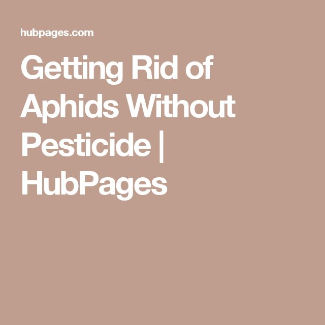 how to get rid of aphids without pesticides