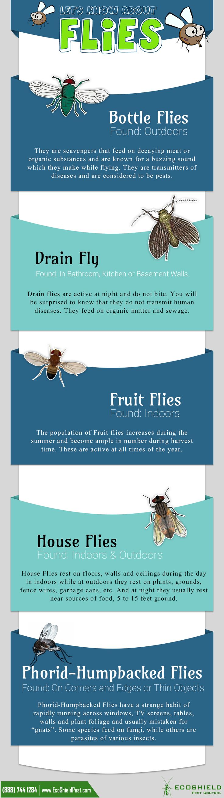 34 best Pestogrpahics images on Pinterest | Pest control, Ants and ...