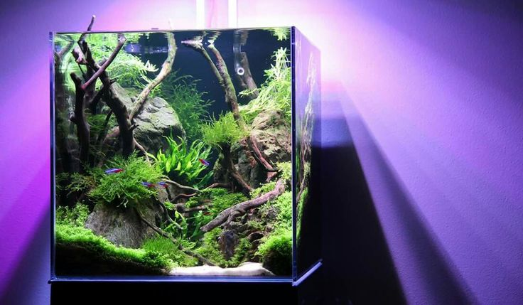 Pin by ricardo marshall on aquascaping pinterest for Best freshwater aquarium fish combination