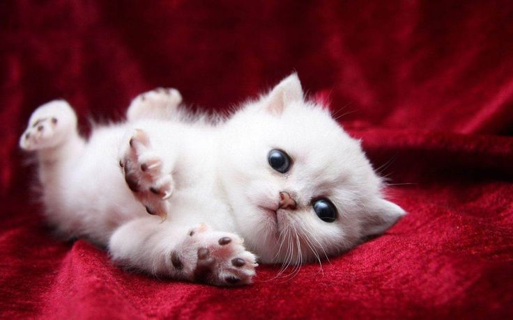 Cute Kittens Images Hd  The Cutest Kittens 1600×1200 Funny Kitten Pictures | Adorable Wallpapers